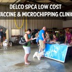 Low-cost Vaccine and Microchipping Clinics - Reminder!!