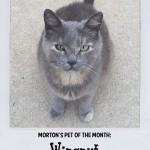 Morton's Pet Of The Month - Wingnut